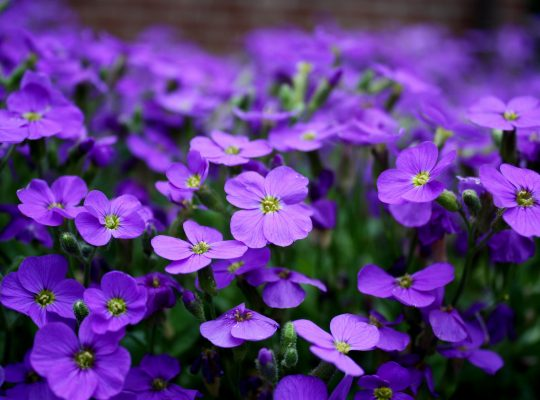 flowers-2233592_1920